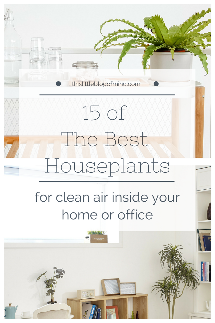 These 15 indoor plants are easy to care for and will purify the air inside your home or office | simplywellfamily.com