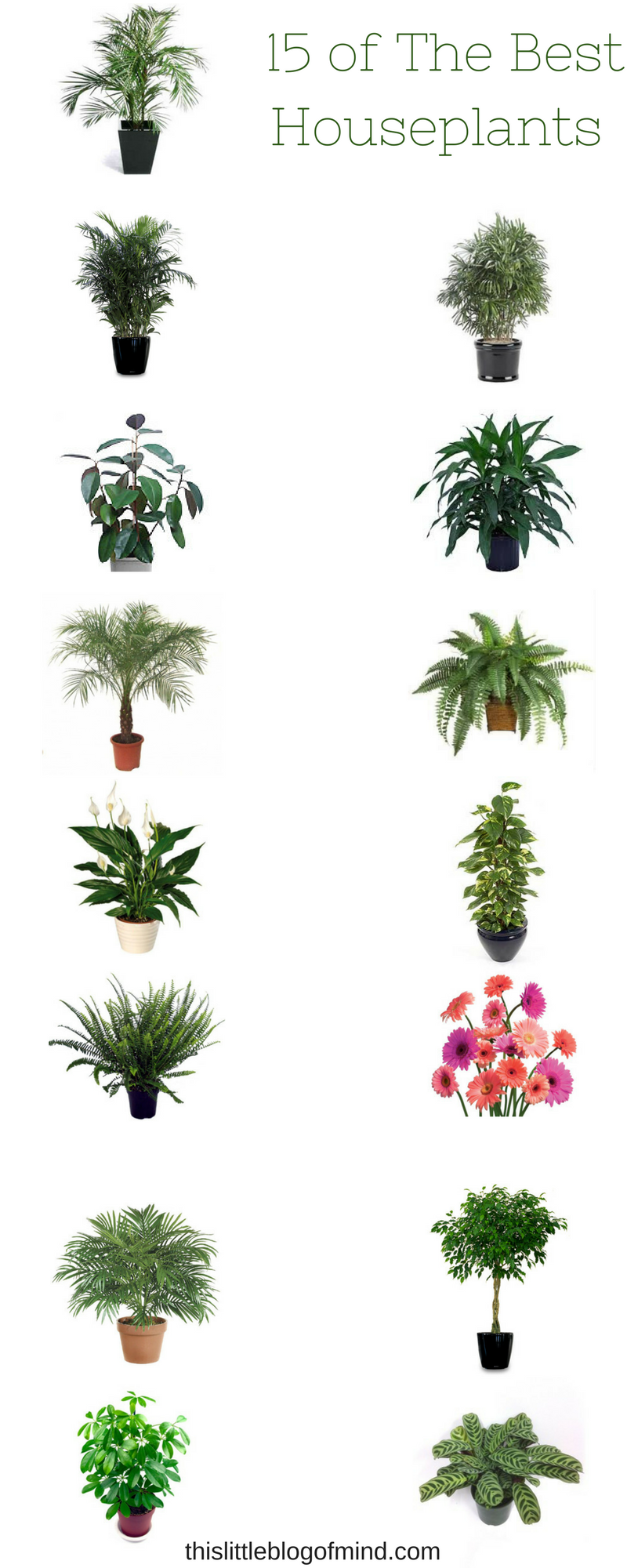 15 of the best plants to purify the air of your home or office | simplywellfamily.com