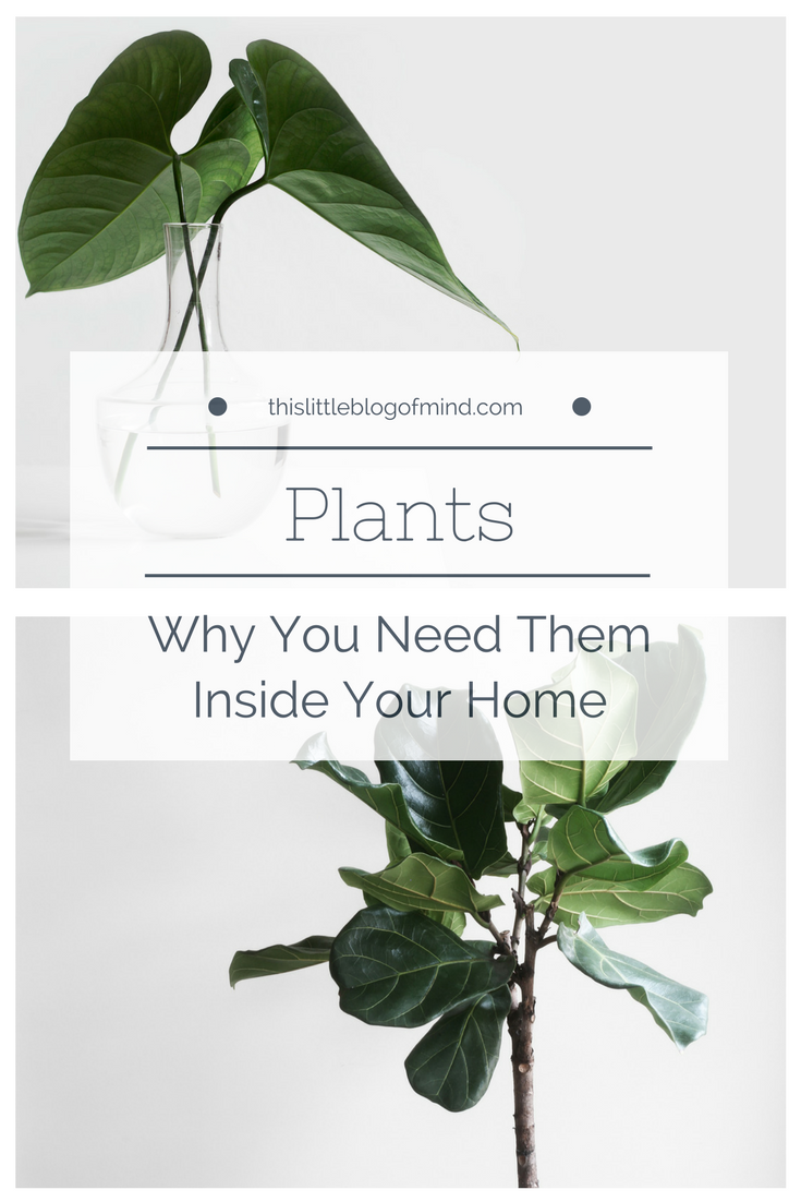 House plants purify the air in our homes. Not only do they provide health benefits but they are also good for our mental health. They're eco-friendly, toxin-free, and promote wellness! | simplywellfamily.com